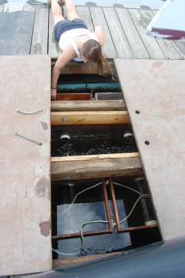 Annie opening up the upwellers under the dock